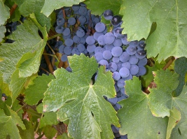 foto vins